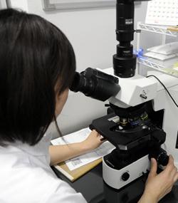 顕微鏡で細胞を診ています